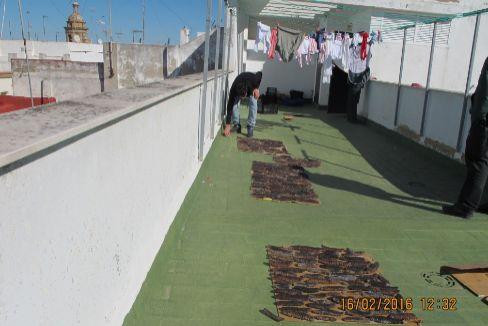 Ejemplares de pepinos de mar decomisados por la Guardia Civil, secándose al sol en una azotea de Cádiz. CRÓNICA