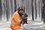 Rescate de un koala