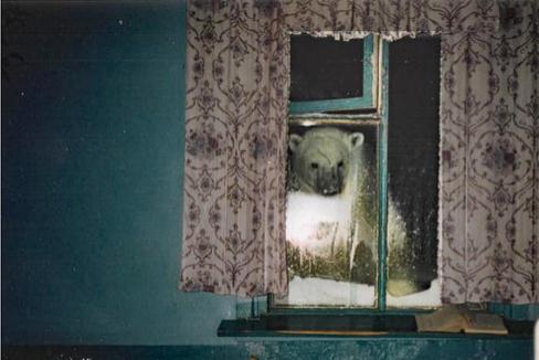 La aldea rusa cercada por 70 osos polares gigantes