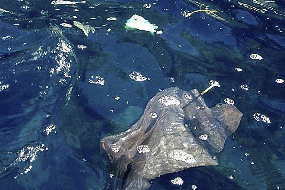 Basura marina en el Puerto de Sóller. MONTSE COMPA