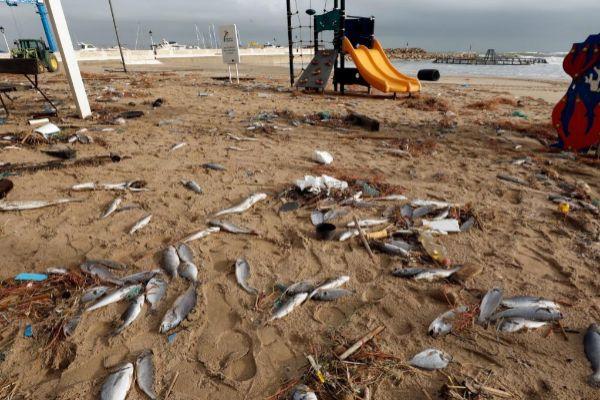 Peces muertos arrastrados a la playa valenciana de El Perelló por la rotura de una piscifactoría | Juan Carlos Cárdenas EFE
