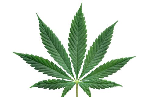 Todas las oportunidades del negocio del cannabis