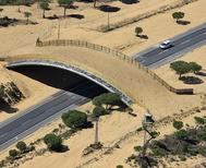 Pasos de fauna para linces ibéricos en una carretera del entorno del Parque Nacional de Doñana, con el fin de evitar los atropellos.