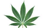 Brotes verdes: todas las oportunidades del negocio del cannabis