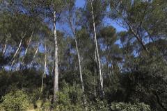 Zona boscosa en la provincia de Barcelona.