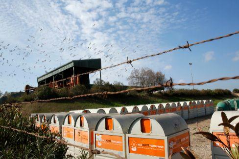 Gaviotas sobrevuelan la supuesta planta de reciclaje de Estepa (Sevilla).
