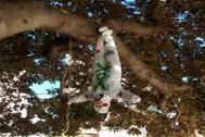 Muñeco colgado del ficus de la plaza María Agustina de Castellón, este domingo.