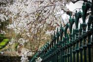 Un árbol en flor este jueves en un parque de San Sebastián.