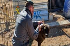 Detenida la dueña de una protectora de Tarragona por la muerte de 500 animales