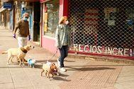 El salvoconducto del perro frena los abandonos y sube las adopciones