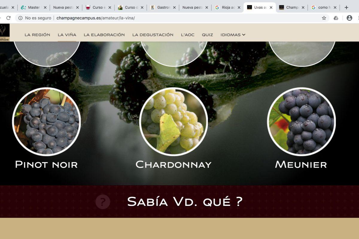 La web de Champagne Campus aporta contenidos fundamentales sobre el espumoso francés.