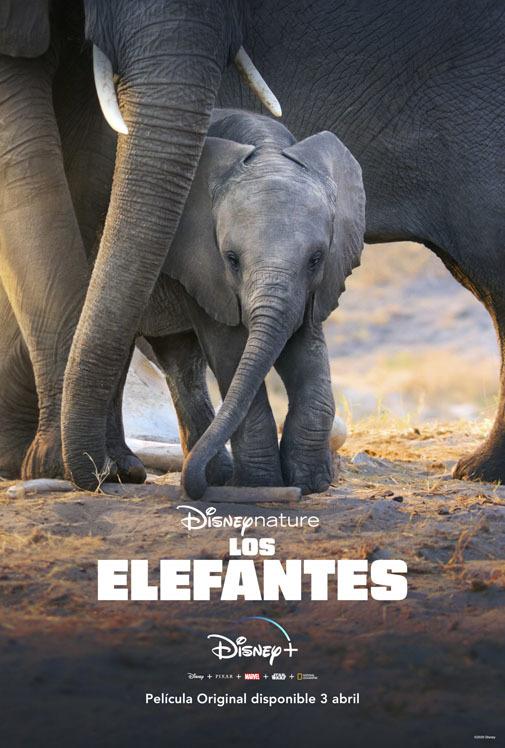 El cartel de la película 'Los elefantes'. Foto: cortesía de Disney.