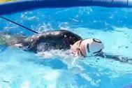 Van Rouwendaal entrena en su piscina hinchable.