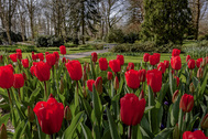 Más de 32 hectáreas tapizadas de tulipanes y otras especies. El espectáculo se repite desde 1950 y se ha convertido en una cita imprescindible para los amantes de las flores (y de la primavera en general). Al jardín floral más grande del mundo, situado a media hora de Ámsterdam, acuden más de un millón de personas de más de cien países distintos.