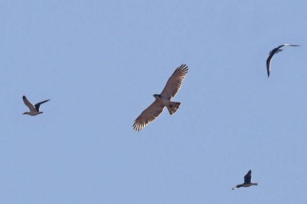 Aves migratorias surcan el cielo de Valencia ciudad.