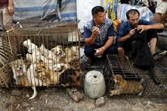Mercado de animales con perros en Yulin, China, en 2015.