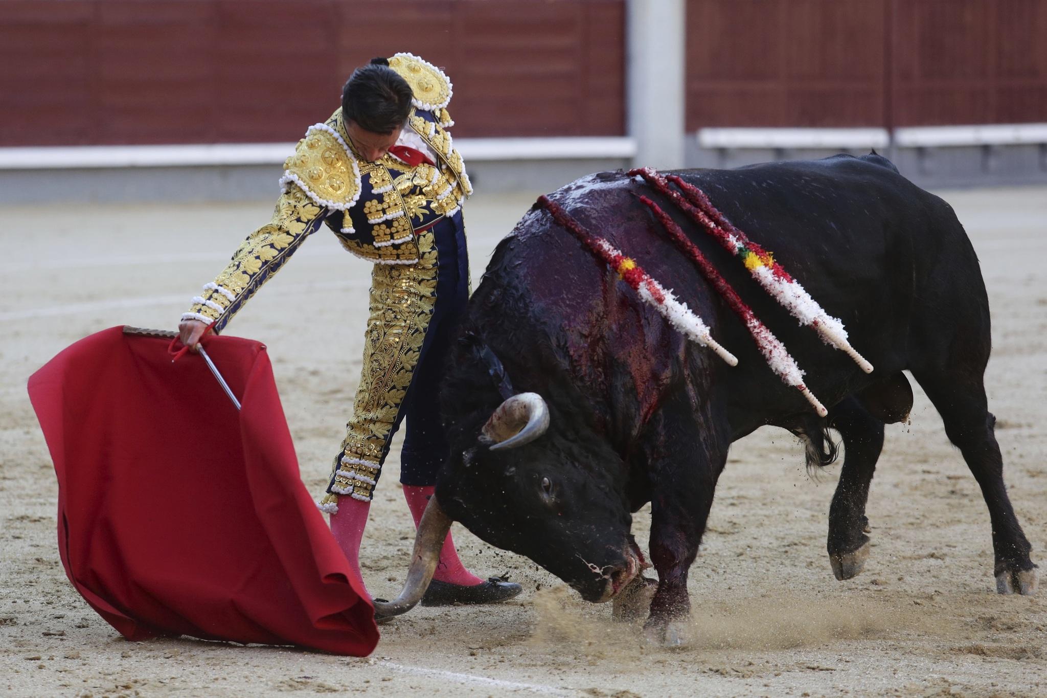 Ricardo Gallardo reduce la ganadería al 50% y envía 700 cabezas de ganado al matadero