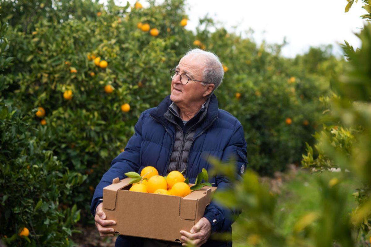Un agricultor recogiendo naranjas que después enviará al consumidor.