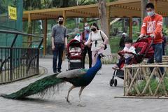 Visitantes con mascarillas en el zoo de Wuhan.