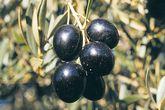 Conocida también como marteña, esta variedad -la más abundante de...
