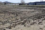 Terrenos de cultivo afectados por el temporal Gloria.