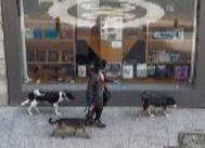 Una mujer pasea varios perros por una calle del centro se Madrid. FIRMA DE FOTO: lt;HIT gt;ANTONIO lt;/HIT gt; lt;HIT gt;LUCAS lt;/HIT gt;