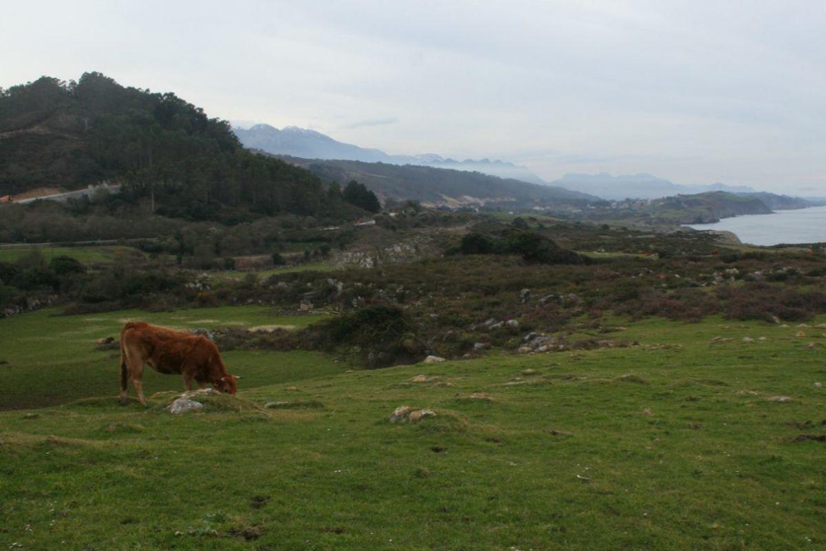 Prado de Piamango (Asturias).