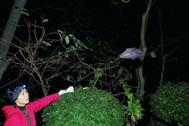Shi Zhengli, buscando murciélagos en 2004.