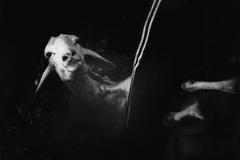 Trashumancia durante la pandemia: la gesta de esquilar en estado de alarma