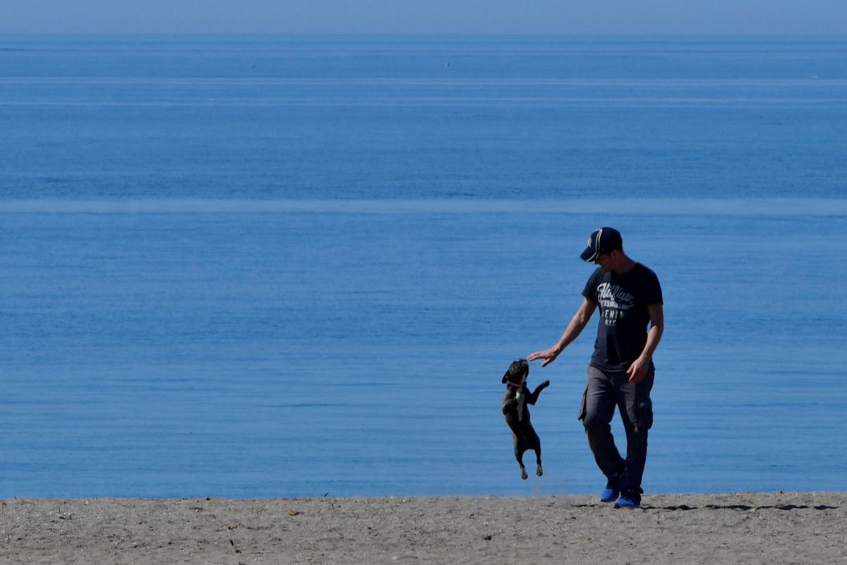 Una persona pasea con su perro por la playa de La Térmica, en Almería.