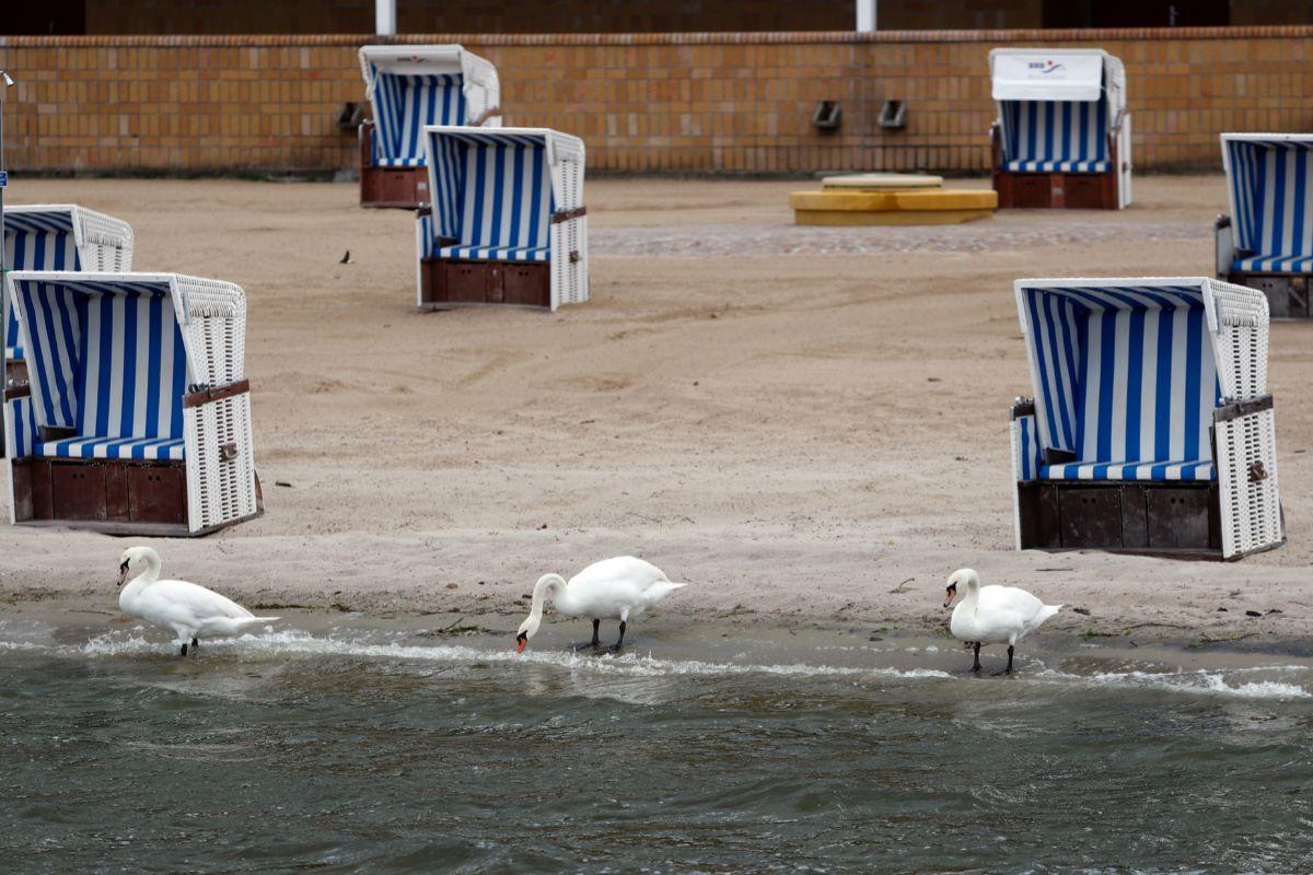Canto de cisne a la orilla