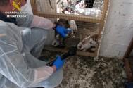 Investigan a un hombre en Murcia que convivía con un centenar de animales en pésimas condiciones