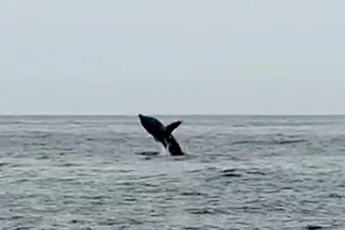 El tiburón avistado a 400 m de la playa de La Mamola (Granada).
