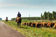 Tras el mejor asado de Uruguay, el país con cuatro veces más vacas que habitantes