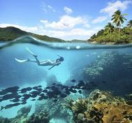 Los arrecifes de coral son uno de los ecosistemas que están en mayor peligro de extinción. De ellos dependen el 25% de las especies marinas.