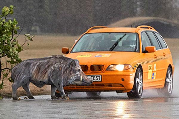 Qué hay que hacer (y qué no) cuando se cruza un animal en la carretera