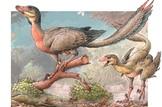 Reconstrucción artística de un individuo adulto y uno más joven del Overoraptor chimentoi. Conicet.gov.ar/Ilustración: Gabriel Lio