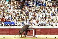 Un toro salta al callejón de Tafalla en el año 2010