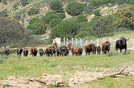 Equiparación de tasas y promoción de las ganaderías regionales: las peticiones de los ganaderos de Madrid a Ayuso