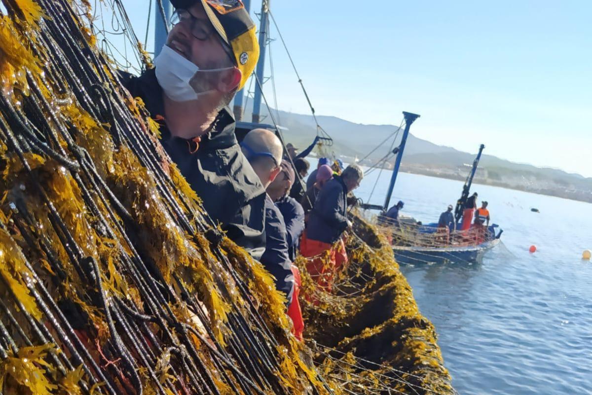 Redes llenas de algas, este viernes en la costa de Cádiz.