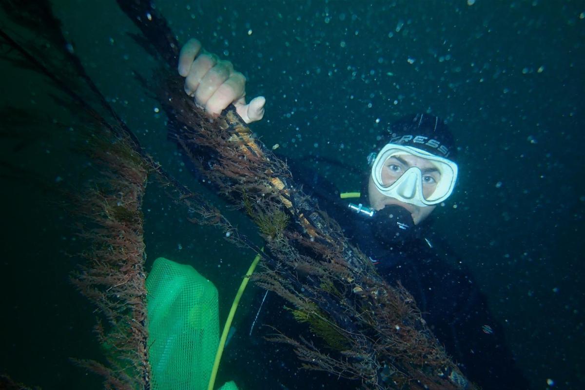 Un submarinista muestra la alga invadora, este viernes en el litoral gaditano.