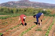 Trabajadores del sector de la agricultura.
