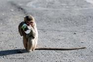 Un mono sostiene una botella de leche