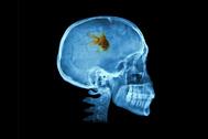 La sociedad pez: por qué nuestra atención ha quedado reducida a nueve segundos