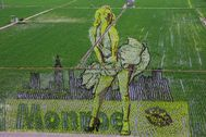 La imagen icónica de Marilyn en un campo de arroz de Shenyang (China)