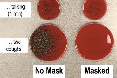 Aspecto de los cultivos de bacterias con o sin mascarilla.