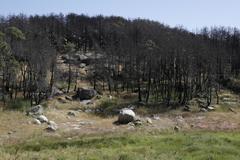 Montes quemados en Cenicientos un año después del incendio.