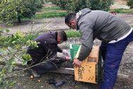 Trabajadores de la organización conservacionista Grefa montando una caja nido