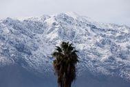 Una palmera frente a la cordillera de los Andes.