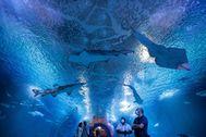 Visitantes con mascarilla en el túnel de tiburones del Oceanogràfic.